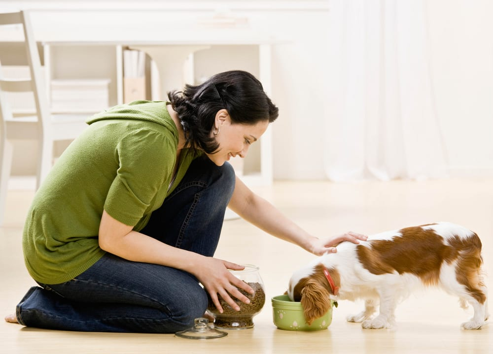 How to take Care of your Pets