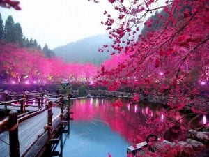 x1920_Cherry-Blossom-Lake-Sakura-Japan