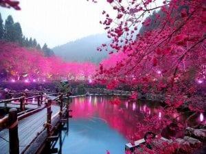 x1920_Cherry-Blossom-Lake-Sakura-Japan