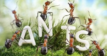 8-we-are-the-ants