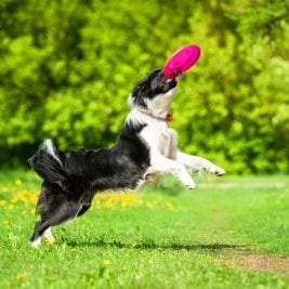 Games Dogs Love to Play