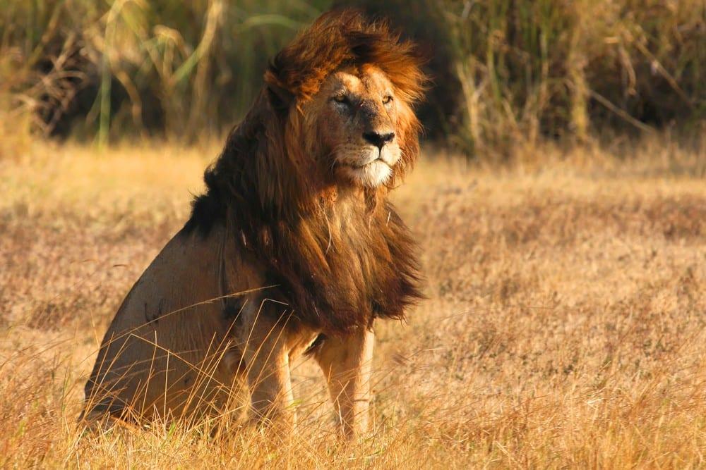 Most Dangerous Wild Animals