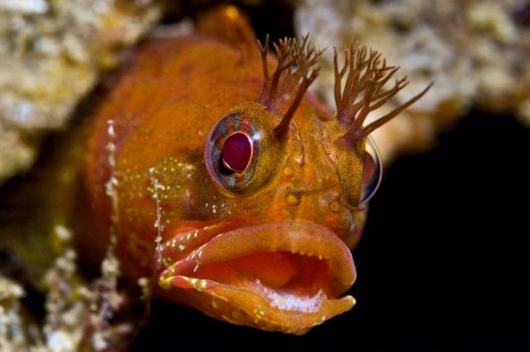 horrifying deep sea creatures