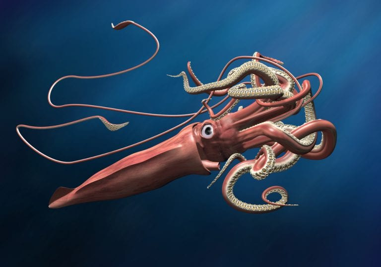 horrifying deep sea creatures