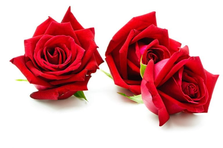 write few lines about rose flower in english