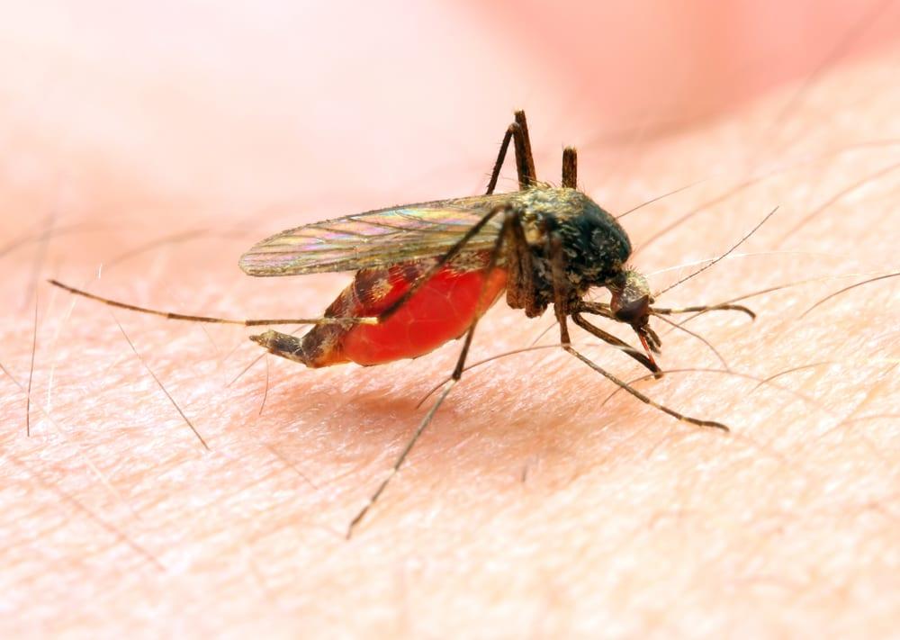 Most Dangerous Bugs