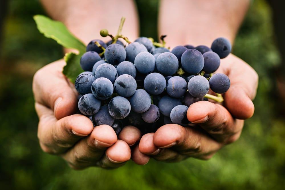 Immune Boosting Foods - Grapes