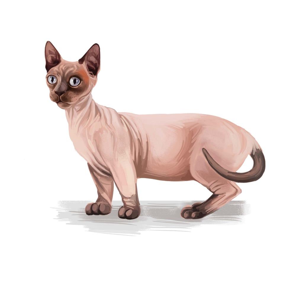 Bizarre Cat Breeds - Minskin
