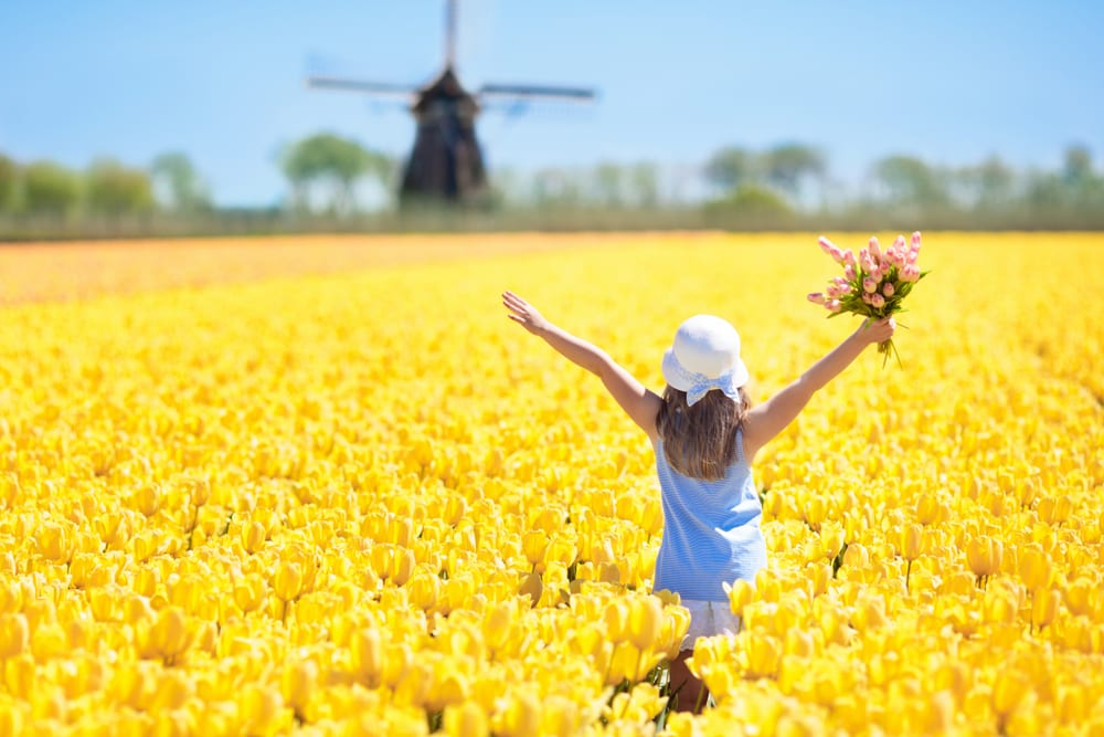 Happiest Countries - Netherlands