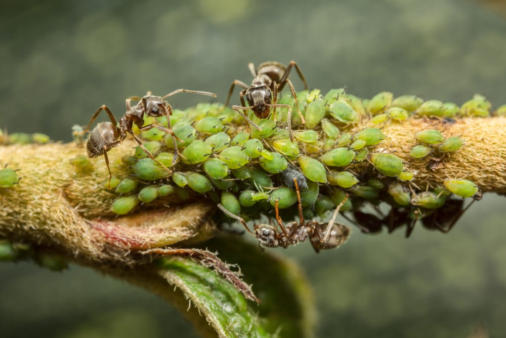 Facts About Ants - Technically farmers