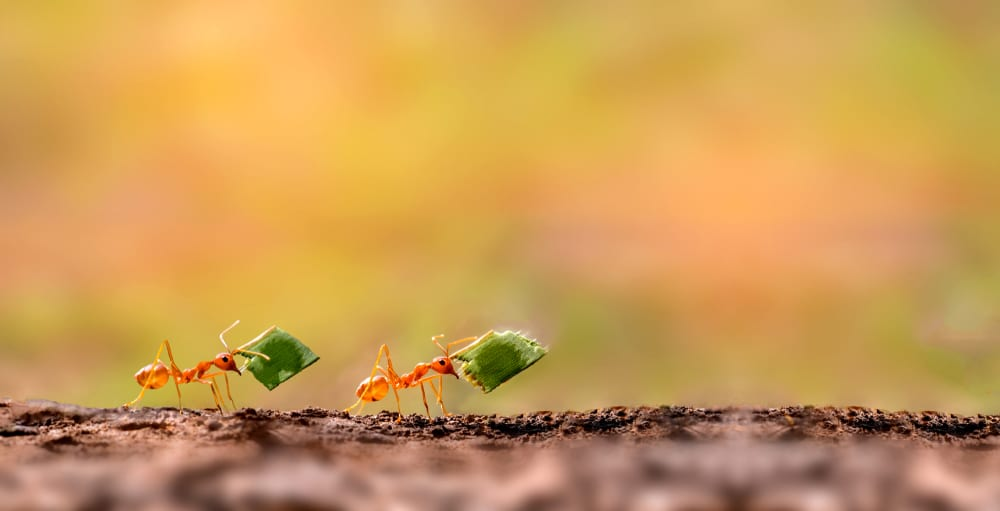 Facts About Ants - Make Slaves