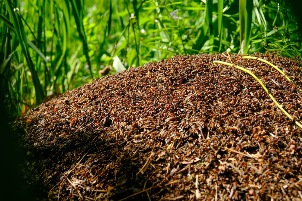 Facts About Ants - lots of ants in the world