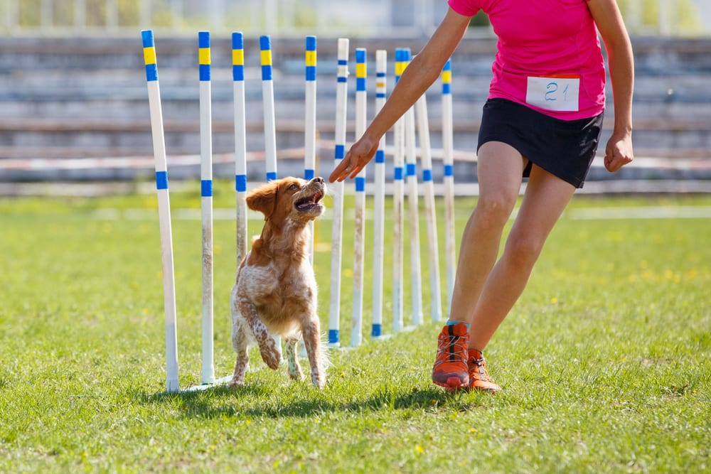Most Unusual Kids Sports - Dog Sport