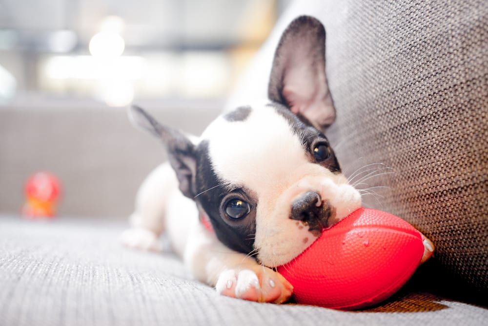 Facts about dogs - Mature Physically