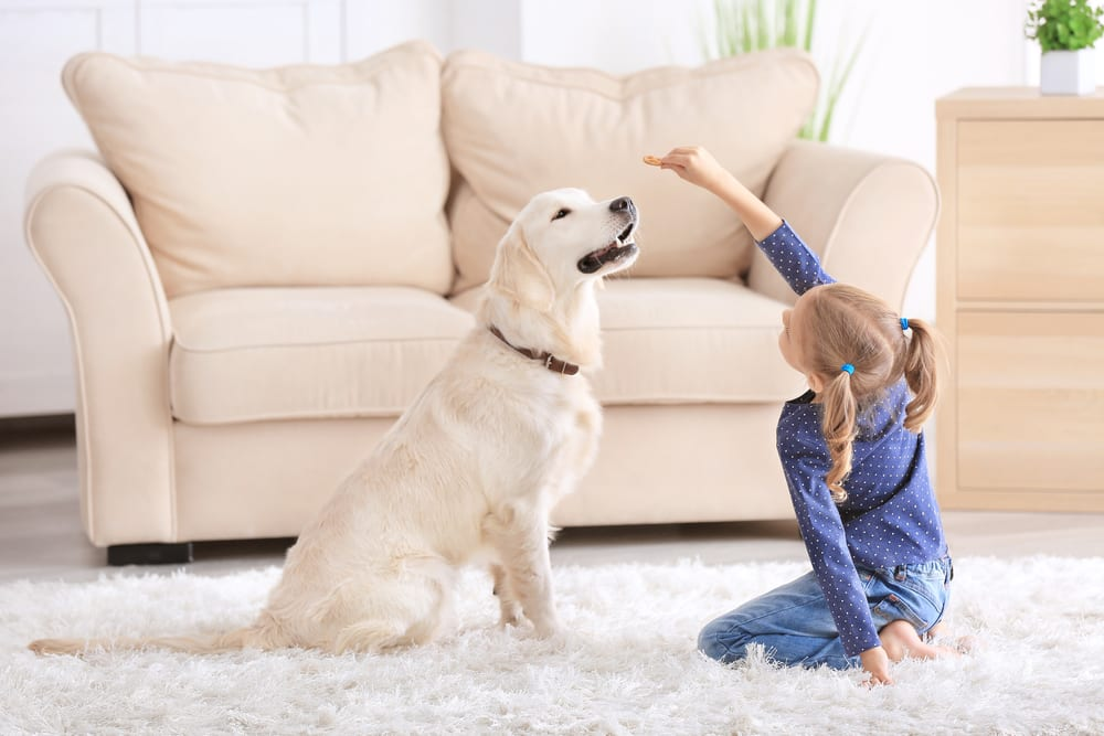 Facts About Dogs - dogs are smart like a toddler
