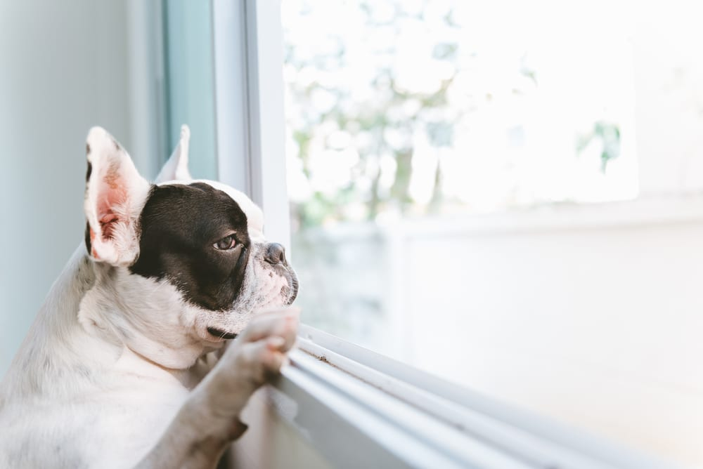 Facts About Dogs  - Dogs Know Time Very Well