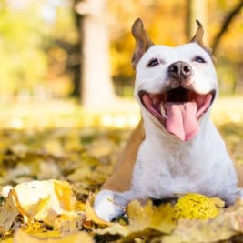 Facts About Dogs - Dogs mouth can exert an average of 320 lbs of pressure