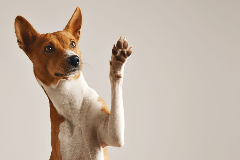 Facts about dogs - Sweat Glands Of Dogs Are Only At Their Paws