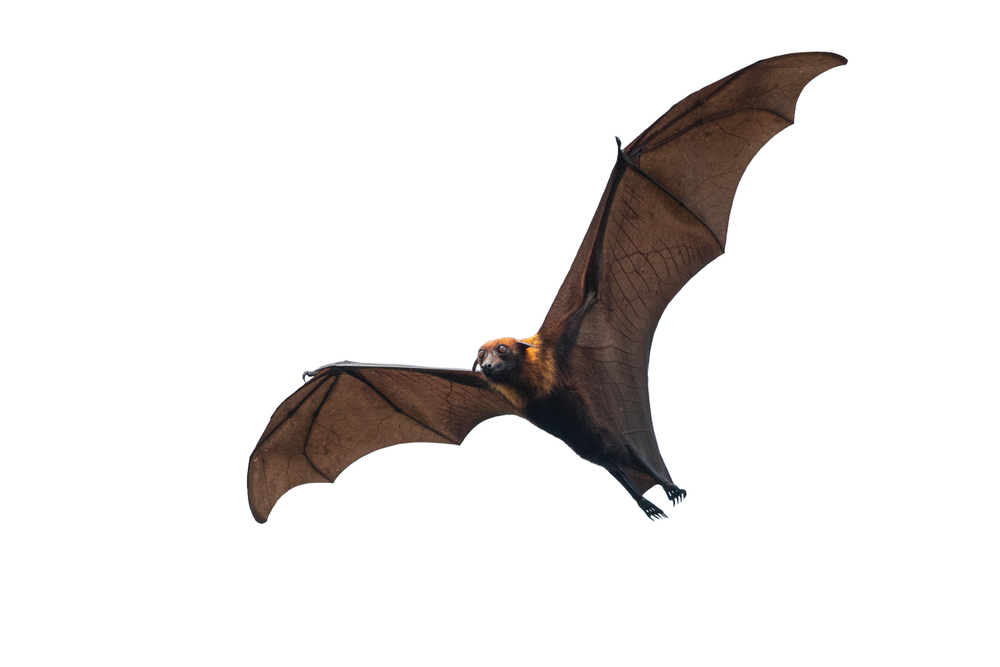 Facts About Bats