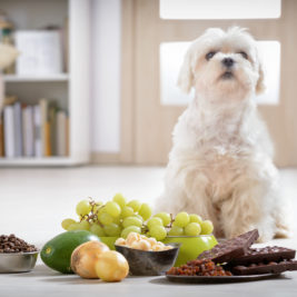 Vegetables and Fruits That Are Harmful To Your Dogs