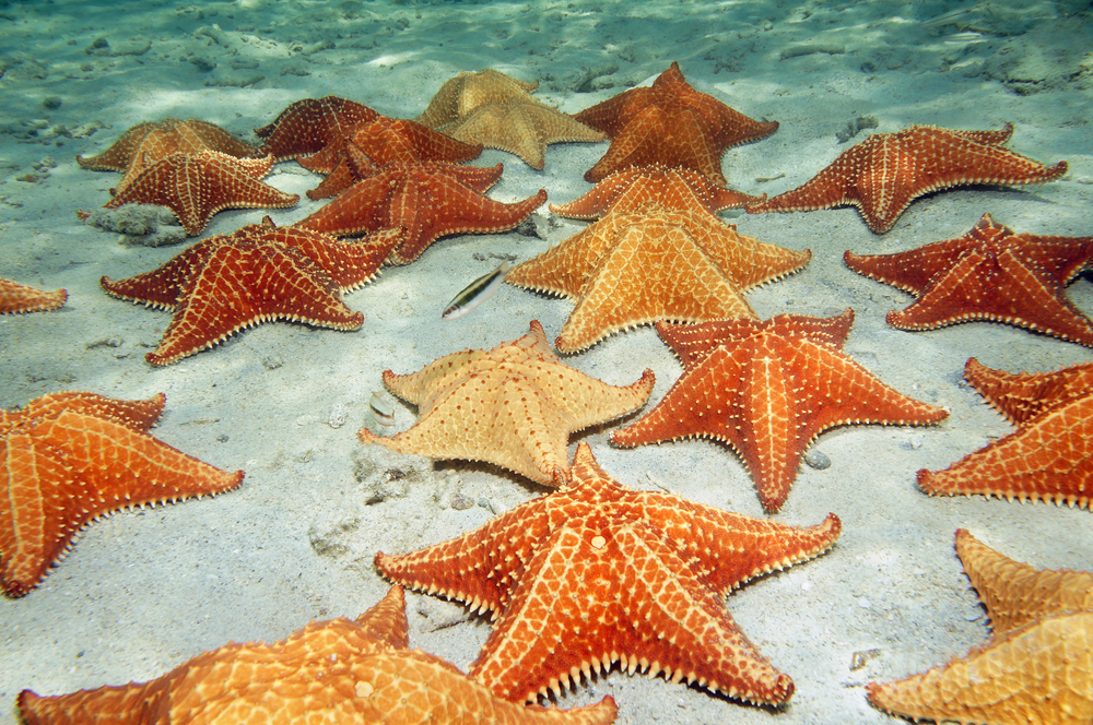 Creatures That Can Regrow Body Parts - Sea Star