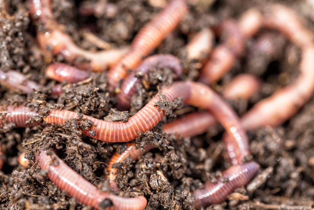 Creatures That Can Regrow Body Parts - worms