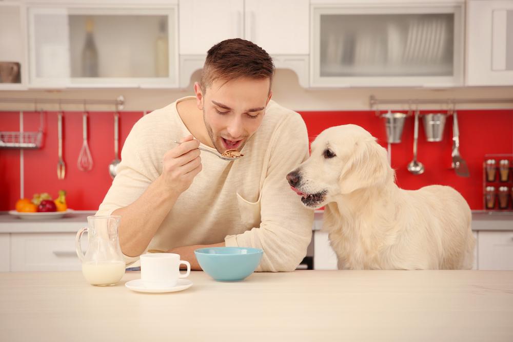 Strangest Jobs - Dog food taster